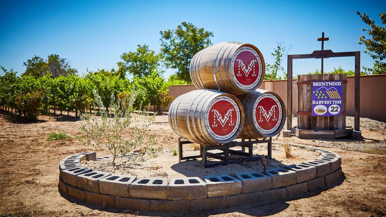 McCauley Estate Vineyards Wine Tasting & Live Music
